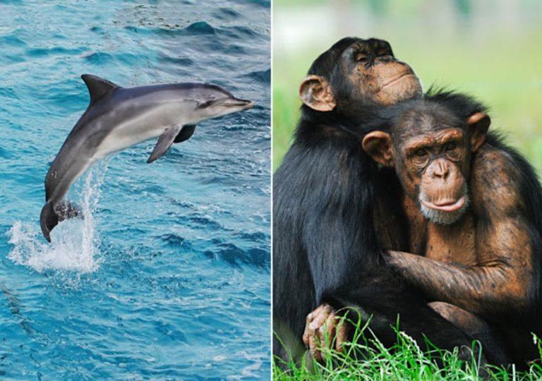 दुनिया में ये 5 जीव इंसान से भी ज्यादा होते हैं बुद्धिमान